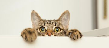 betydning i drøm kat drømmetydning kat